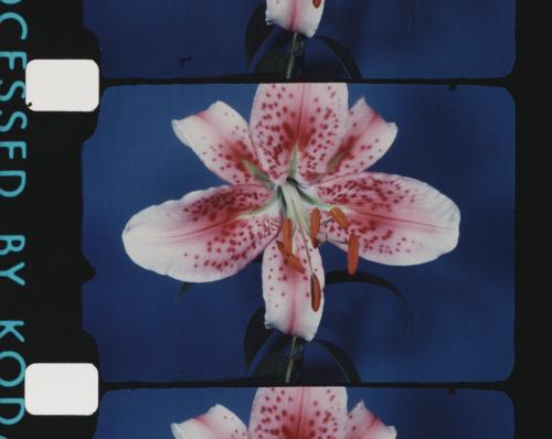 CFA_OOTV_June-Gromer_Flowers1